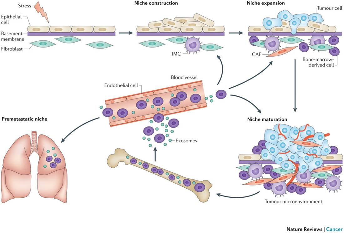 sampathophysiology main article carcinogenesis cancers are Skip to main content these results suggest that our classification of submucosal cancers may reflect different carcinogenesis pathways gut 1999 45 794-795.